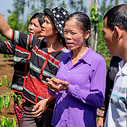 "INDIVIDUAL(S) PHOTOGRAPHED: Vi Thị Thanh (wearing purple) and K'La (right). LOCATION: Sar Nar Village, Quang Sóc Commune, Đắk Glông District, Đắk Nông Province, Vietnam. STORY: ""It used to be a 'dog-eat-dog' world in our village!"" jokes K'La, ""but we learnt that we could work faster and more effectively as a group"". A communal field close to the wooden houses of the village of Sar Nar in  Dak Nong Province is testimony to the success of this cooperation. K'La's farming group were lent one hectare to jointly cultivate house plants. 20% of their profits are invested into a group fund, 30% cover overheads and 50% is divided equally between the 18 group members. This is the newest successful ethnic minority farming group established by the Dak Glong District Farmers' Union and the provincial Agricultural and Rural Development Department, with Oxfam's support. Aiming to empower small-scale ethnic minority farmers, Oxfam worked with the Centre for Community Empowerment to facilitate workshops here on minority rights and values. As ethnic M'nong with a limited grasp of Vietnamese language, K'La's group used to feel isolated and consider themselves among the lowliest members of society. But the project has dramatically increased people's confidence and fortified their community identity. Through attending workshops, their Vietnamese has improved, giving their community a stronger voice. Contact with other ethnic minority farming groups and participation in cultural events has also led to a better understanding of other ethnic minorities. ""We had almost forgotten our culture, but now everyone wears traditional clothing during the holidays; we sing our songs and dance to our music"", says K'La."