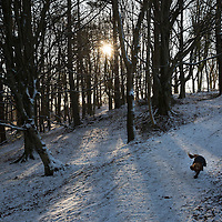 Snow and Ice, Perthshire...28.12.14<br /> A man and his dog start the walk down from the top of Kinnoull Hill in Perth as the freezing conditions bite into another day..<br /> Picture by Graeme Hart.<br /> Copyright Perthshire Picture Agency<br /> Tel: 01738 623350  Mobile: 07990 594431