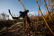 Carneirinho_MG, Brasil...Plantacao de cana-de-acucar em Carneirinho...The sugar cane agriculture in Carneirinho...Foto: LEO DRUMOND / NITRO