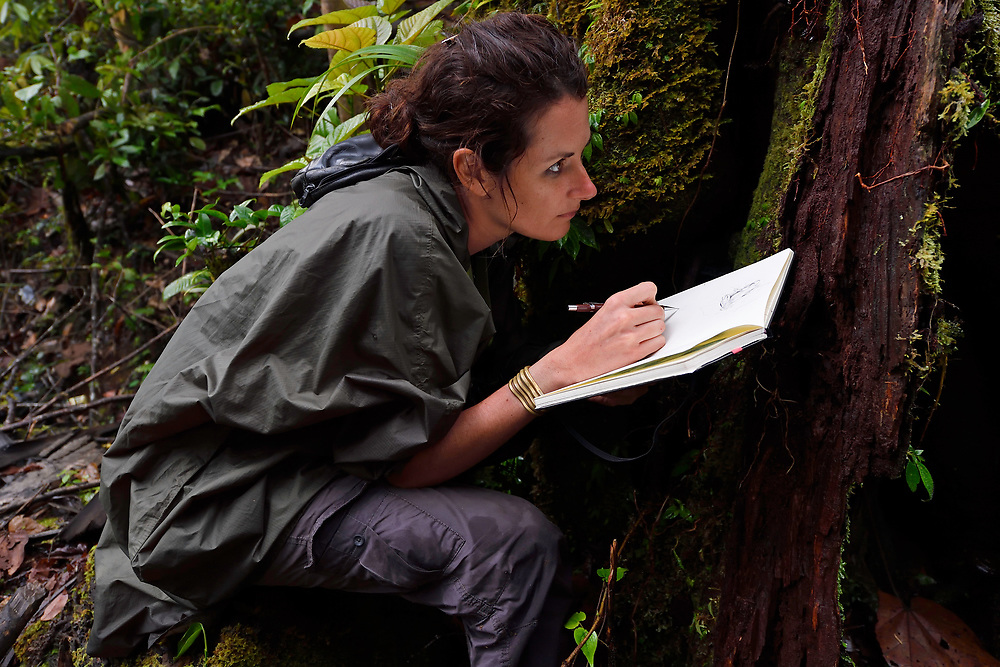 "Artist Stéphanie Ledoux at work in the Montane rainforest, near FakFak, Mainland New Guinea, Western Papua, Indonesian controlled New Guinea, on the Science et Images ""Expedition Papua, in the footsteps of Wallace"", by Iris Foundation"
