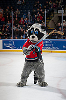 KELOWNA, CANADA - JANUARY 3: Rocky Raccoon, the mascot of the Kelowna Rockets stands on the ice during intermission against the Tri-City Americans on January 3, 2017 at Prospera Place in Kelowna, British Columbia, Canada.  (Photo by Marissa Baecker/Shoot the Breeze)  *** Local Caption ***