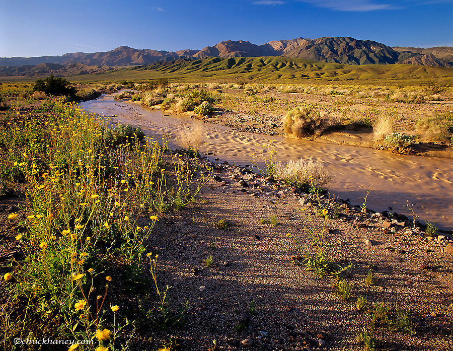 The Armgosa River runs in a wet spring in Death Valley National Park in California