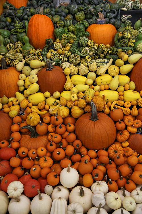 Fall squash and pumpkins displayed in the agricultural barn at the Fryeburg Fair