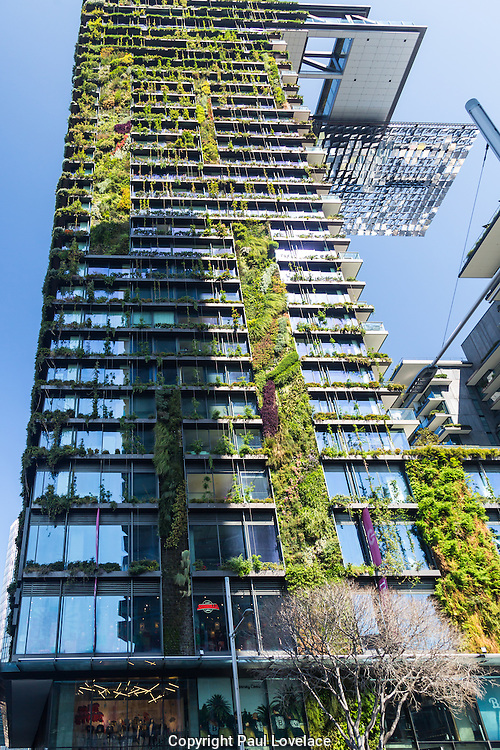 General Views showing One Central Park which is built around Chippendale Green. The bulding itself was designed by award-winning Parisian architect Jean Nouvel and the vertical gardens designed by the artist and botanist Patrick Blanc,Chippendale, Sydney, Australia.
