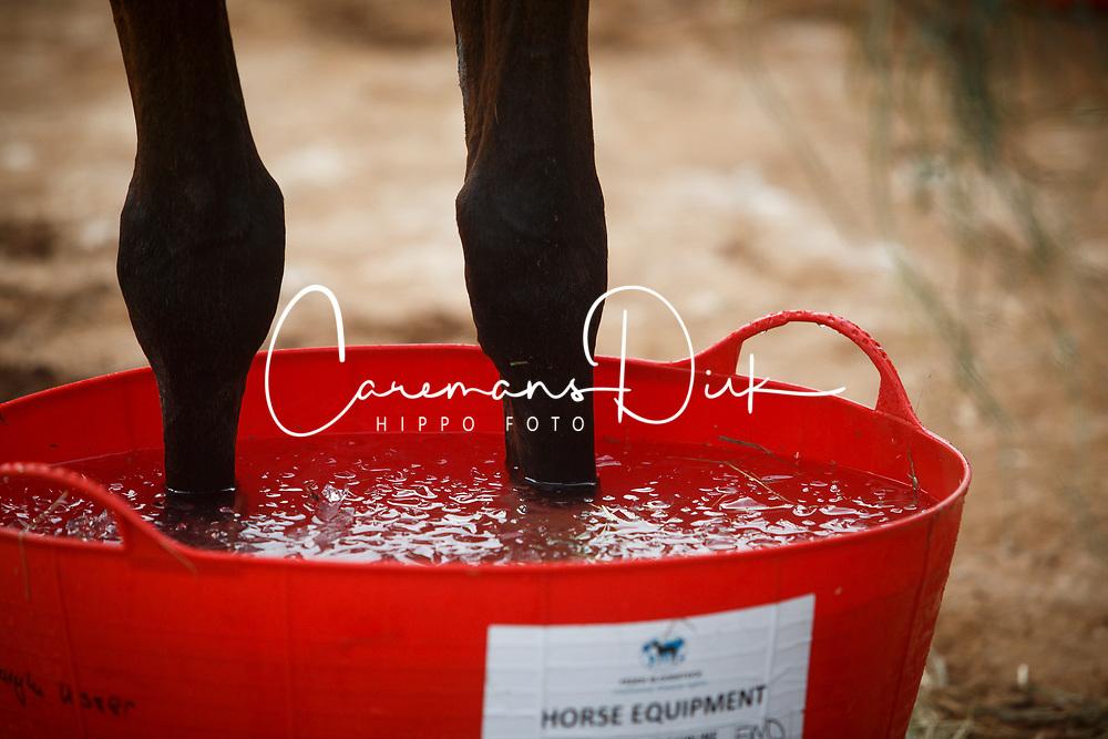 Detail<br /> World Equestrian Games - Tryon 2018<br /> © Hippo Foto - Sharon Vandeput<br /> {date