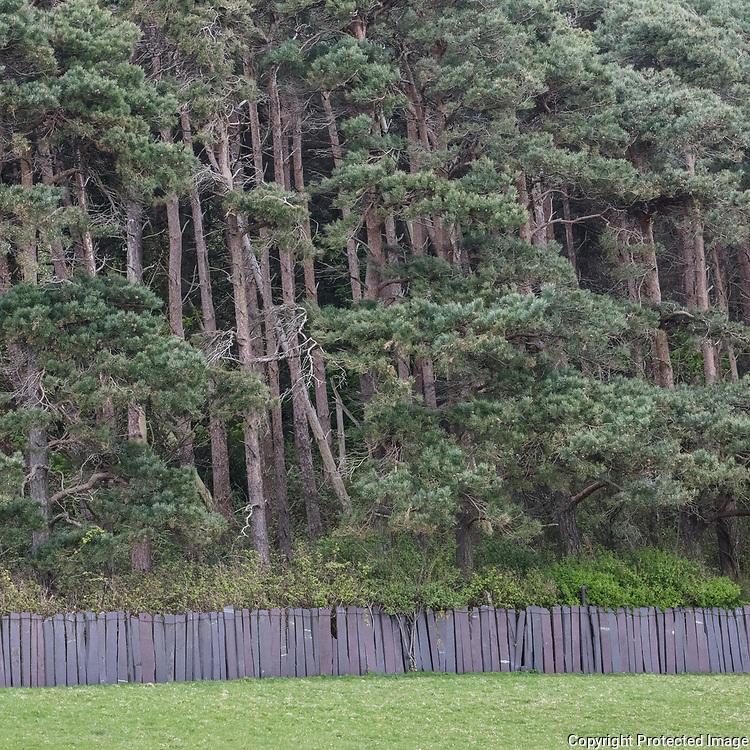Woodland with slate fence, Llanfairfechan, Conwy.