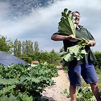 Nederland. Beesel. 12 mei 2015.<br /> Rinus Broos, vrijwilliger bij De Historische Groentehof in Beesel tussen de rabarber.<br /> Foto: Jean-Pierre Jans