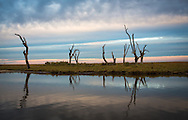 Marsh with dead live oak trees in  Point au Chien, Louisiana. Point au Chien is subject to coastal erosion. The area is inhabited by members of the Point-aux-Chien indian tribe and fishermen.
