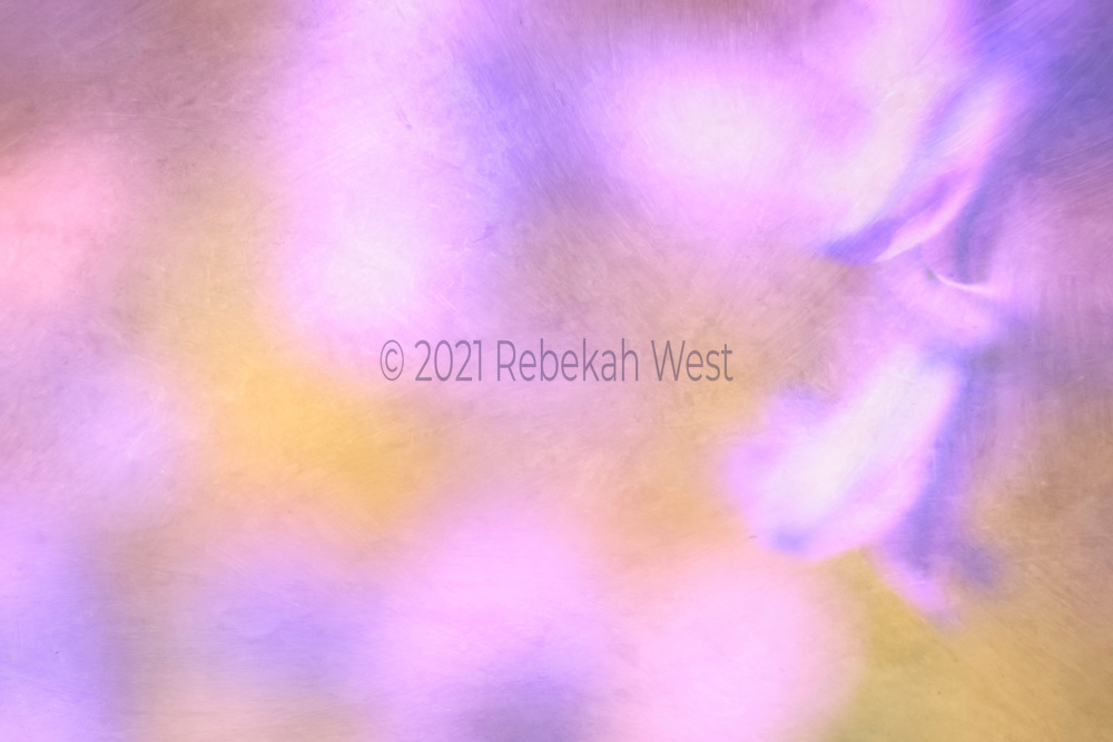 two soft blurry bell flowers in purple red violets whites in upper right corner, blurry mimics of the flowers throughout, golden highlights, horizontal field, flower art, feminine, high resolution, licensing, iridescent, 5389 x 3592
