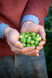 Handful of harvested sprouts