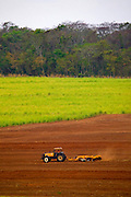 Sao Jose do Rio Preto_SP, Brasil...Programa Biota da Unesp, na foto plantacao de cana...The Biota program of Unesp, in this photo the sugar cane agriculture...Foto: JOAO MARCOS ROSA / NITRO
