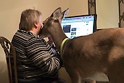 Dillie comes to nuzzle Melanie as she checks her e-mail. Melanie is in the process of publishing a book she wrote about Dillie and spends most of her off time on the computer.