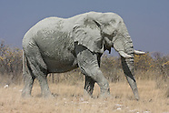 African mammal photos