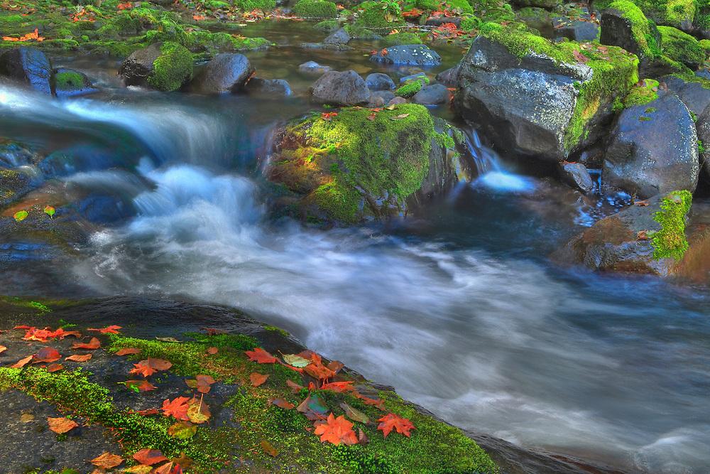 Sweet Creek Lower Cascade Falls - Mapleton, Oregon - HDR