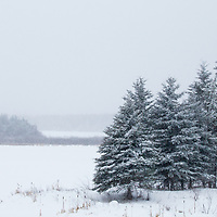 Boreal forest and grassland in winter, Riding Mountain National Park, Manitoba, Canada