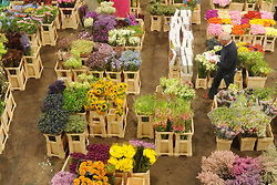 © Licensed to London News Pictures. 15/03/2012. London, UK. A man sorts out a clients order amongst the flowers. The Mothering Sunday sales rush is on for flower growers, suppliers, florists and retailers amongst the Flowers at the New Covent Garden Flower Market on March 15th 2012 in London, England. New Covent Garden Flower Market is London's premier wholesale market stocking the widest range of flowers, plants and foliage in the UK. The run up to Mothers' Day is crucial in the flower selling calendar as Mothers' Day sales are condensed into about four days making the market very busy. Traditionally, Mothering Sunday was a day when children, mainly daughters, who had gone to work as domestic servants, were given a day off to visit their mother and family. Today, Mother's Day is a time when children give flowers and cards to their mothers, and generally pamper them..  Photo credit : Stephen SImpson/LNP