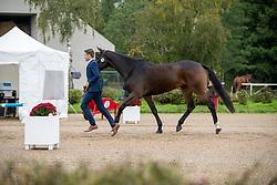 De Cleene Wouter, BEL, Magic Dream van't Hulsbos<br /> Mondial du Lion - Le Lion d'Angers 2019<br /> © Hippo Foto - Dirk Caremans<br />  20/10/2019