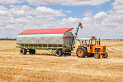 tractor and grain trailor during harvest