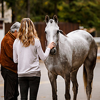 Saint Cloud Arabian Sale 28/09/2017 photo: Zuzanna Lupa