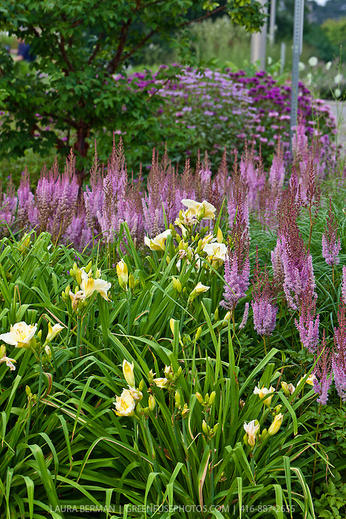 Large lavender astilbes, Joe-Pye weed and pale yellow dayliies in a perennial border,