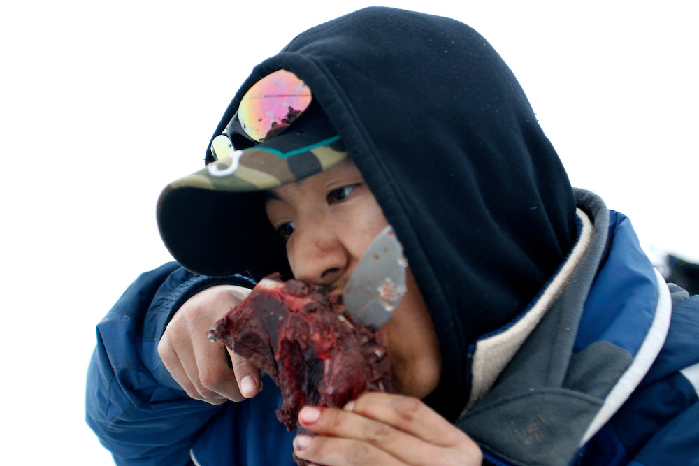 Tomi Salovinik, age 19, eats a piece of seal meat from an animal that was killed just few hour before in Resolute Bay, Canada on Tuesday, June 12, 2007. The Inuit hunt seals for food, and the community uses every part of the seals, either eating the meat or using the hides to make warm clothes. The traditional way of life in the Resolute Bay Inuit community is being threatened by rising temperatures. The dangers of global warming, which have been extensively documented by scientists, are appearing first, with rapid, drastic effects, in the Arctic regions where Inuit people make their home. Inuit communities, such as those living on Resolute Bay, have witnessed a wide variety of changes in their environment. The ice is melting sooner, depleting the seal population and leaving them unable to hunt the animals for as long. Other changes include seeing species of birds and insects (such as cockroaches and mosquitoes) which they have never encountered before. The Inuit actually lack words in their local languages to describe the creatures they have begun to see