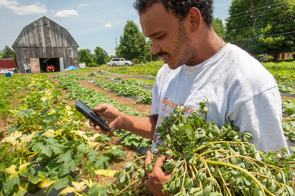 African American farmer holding plants while looking at smart phone in Upper Marlboro, Maryland, USA