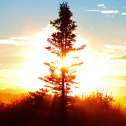 The sun sets behind a spruce tree in Denali National Park.