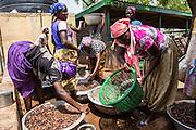 The women of of Kasalagu Women's Cooperative, washing Shea nuts to make Organic Shea butter for Tama.  Tamale, Northern Region, Ghana.