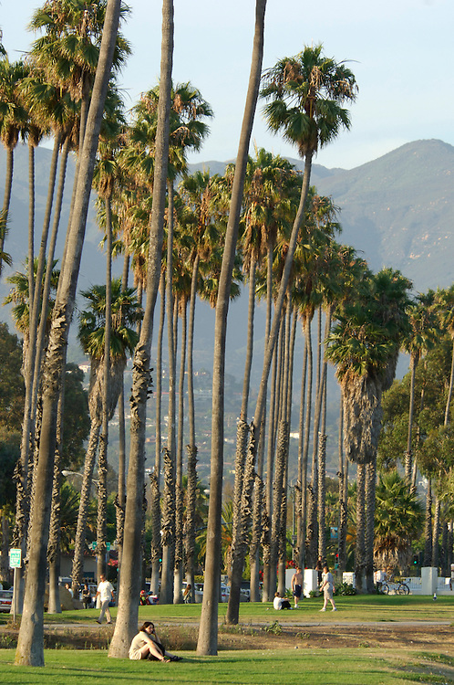 Palm Trees, Waterfront, Santa Barbara, California, United States of America