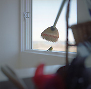 Bird trapped indoors