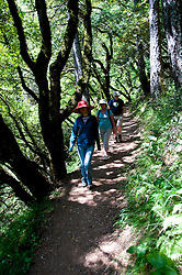California wildflower travel: Hikers on the Matt Davis trail at Mt. Tamalpais State Park.Photo copyright Lee Foster.  Photo # cawild103751