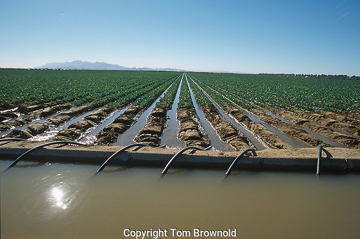 Irrigation Ditch using groundwater in the sonora desert outside of Phoenix, Arizona.