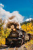The Cumbres & Toltec Scenic Railroad train pulled by a steam locomotive passes through groves of aspen trees in peak autumn color on the 64 mile run between Chama, New Mexico and Antonito, Colorado. The railroad is the highest and longest narrow gauge steam railroad in the United States with a track length of 64 miles. The train traverses the border between Colorado and New Mexico, crossing back and forth between the two states 11 times. The narrow gauge track is 3 feet wide. It runs over 10,015 ft (3,053 m) Cumbres Pass.