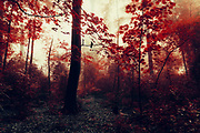 Surreal forest with red leaves