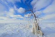 Ice on tree on shore of Lake Winnipeg, Victoria Beach, Manitoba, Canada