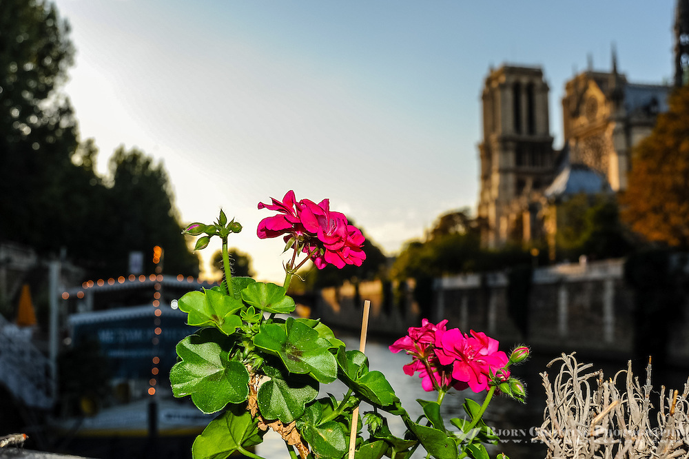 Paris, France. The Notre Dame cathedral at sunset. Flowers on a riverboat restaurant.