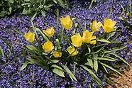 20070430 Spring