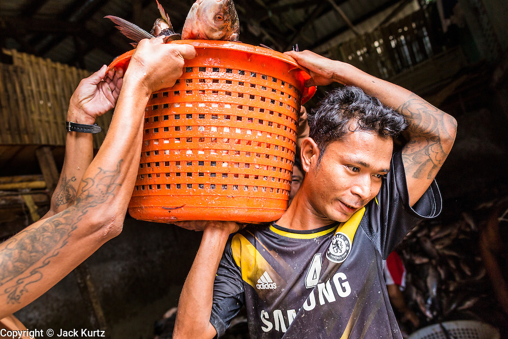 13 JUNE 2013 - YANGON, MYANMAR:   A worker gets help balancing a basket of fresh caught fish on his shoulder in the Annawa Fish Market. The Annawa Fish Market in Yangon is one of the largest fish markets in Myanmar. It serves as both a wholesale and retail market and serves both exporters and domestic customers. With thousands of miles of riverine waterways and ocean coastline Myanmar has a large seafood and fishing industry.   PHOTO BY JACK KURTZ