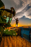 Silhouette of  a farmer on his combine during the wheat harvest, Schields & Sons Farming, Goodland, Kansas USA.