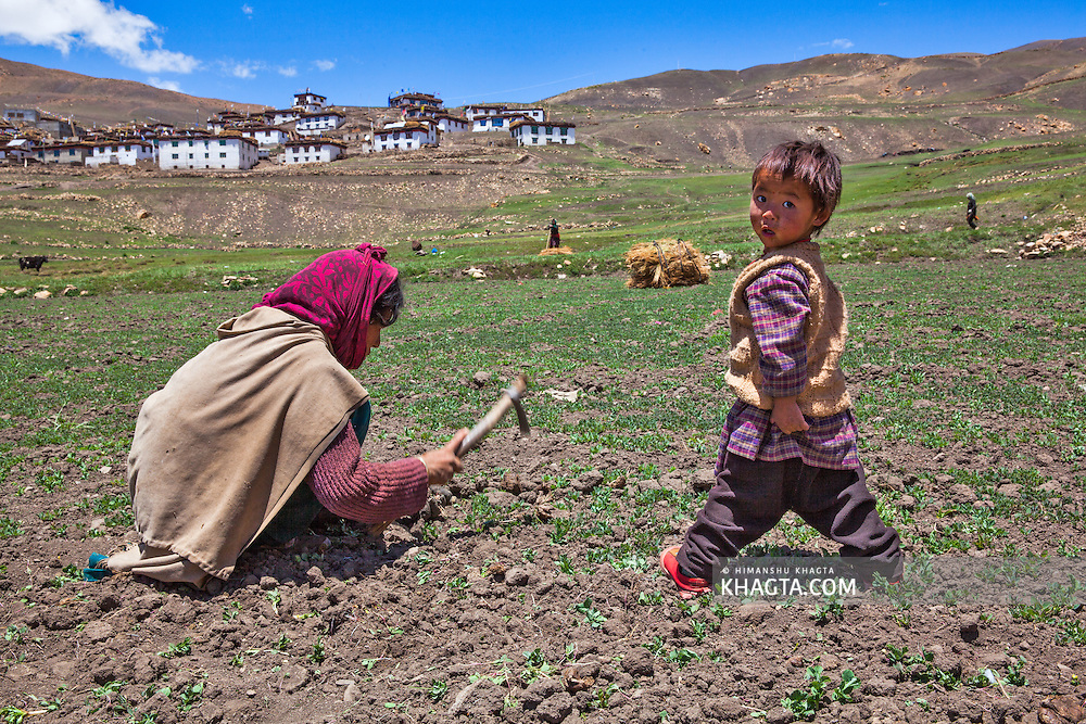 A boy looks at the camera while his mother works in the pea farms in Demul village in Spiti