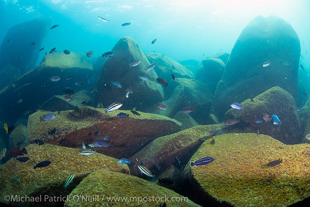 The shallow habitat at Makulawe on the north end of Likoma Island shows the rock dwelling cichids' preferred habitat.