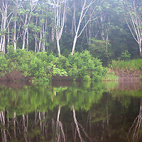 South America, Peru, Amazon. Peruvian Amazon reflections.
