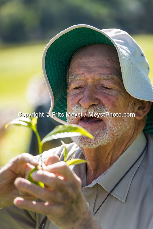 Malawi, July 2017. Planter Robert 'Chip' Kay inspects his tea leafs. Living in former colonial heritage at Huntingdon House. As one of Malawi's first land claims registered in 1874, Satemwa Tea Estate in Thyolo district is among the country's longest established tea and coffee producers managed and operated by third generation members of the Cathcart Kay family. Malawi is known for its long rift valley and the third largest lake in Africa: Lake Malawi. Malawi is populated with friendly welcoming people, who gave it the name: the warm heart of Africa. In the south the lake make way for a landscape of valleys surrounded by spectacular mountain ranges. Photo by Frits Meyst / MeystPhoto.com