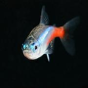 Aquarium Fish and Pet Gallery