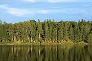 Tall pines reflect on the surface of Mud Lake near Park Rapids, Minnesota.