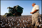 Satartia, Mississippi, USA, 20060916: Billy Joe Ragland watches as a harvester goes through drought damaged cotton fields on September 16, 2006. The plants are too small to be picked efficiently, reducing the harvest by 30%. Photo: Orjan F. Ellingvag/ Dagens Naringsliv/ Corbis