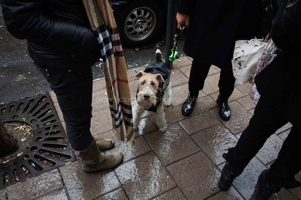 NAPLES, ITALY - 23 January 2014: A terrier and its owner are stopped by the Municipal Police for an identity check and to make sure the owner carries a bag and shovel to pick up the dog faeces,  in in the Vomero-Arenella neighborhood, where a pilot project to keep streets clean from dog excrements was started, Naples, Italy, on January 23rd 2014.<br /> <br /> The city of Naples started a pilot project in the district of Vomero-Arenella aimed at busting irresponsible dog owners from leaving their pets' feces in the street. Blood samples are being collected from the approximately 8,000 dogs living in the neighborhood of 110,00 inhabitants. (the city of Naples counts a total of 960,000 people and 60,000 dogs). In a few months city street cleaners  will locate the excrements, call the police who will send a sample to a laboratory where DNA will be extracted and compared with the results of blood samples.
