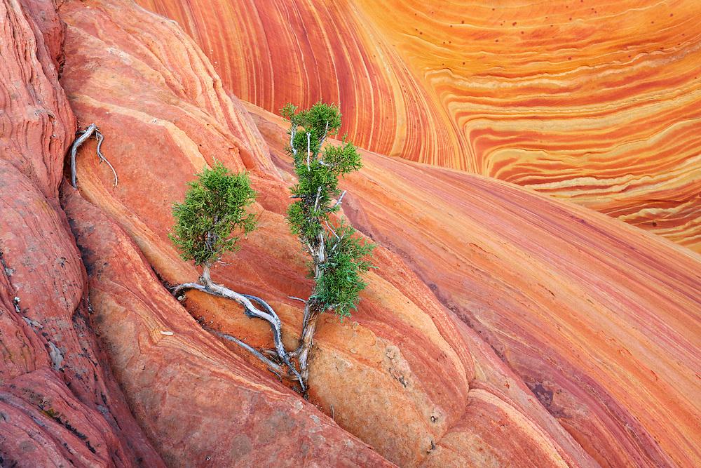Formaciones de roca arenisca de The Wave, en Vermilion Cliffs National Monument, Arizona (Estados Unidos)