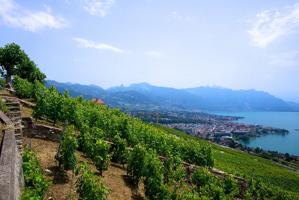 The Terraced Vineyards of Lac Leman (Lake Genevea) looking towards Montreaux