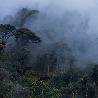 Cloud forest, Guango, Ecuador
